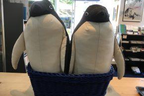 nuwasuさんのぬいぐるみ新作「アデリーペンギン」がやってきました